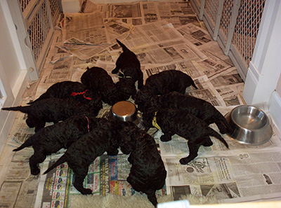 Nova puppies eating