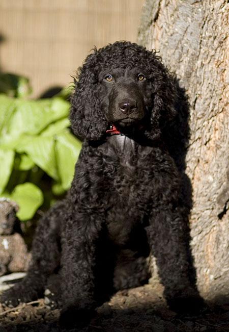 Cooper at 12 weeks