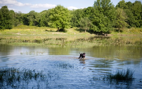 coopers-water-retrieve_sm-2
