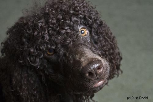 curly-bob