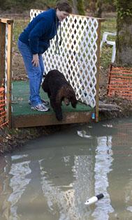 puppy-dock-1-11