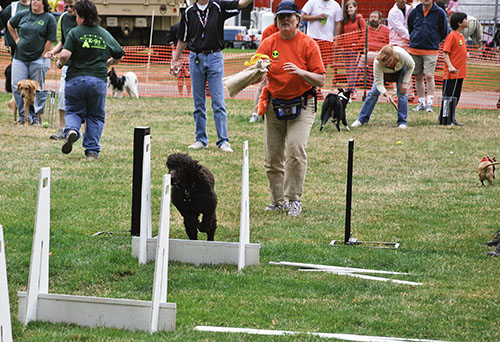 Cooper and Patrice at the start of his run in a flyball heat