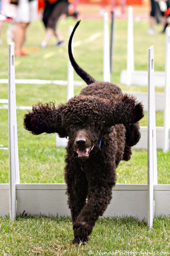 Cooper jumping over hurdle
