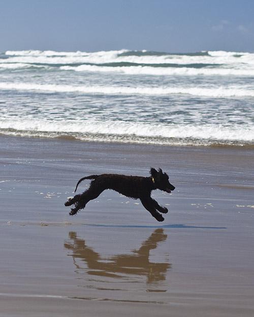 Running, running