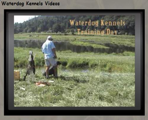 Waterdog Kennels Training Day