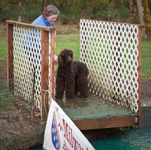 Checking out the puppy dock