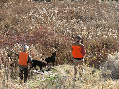 Rod, Cooper, Rio, and Russ approaching cattail patch