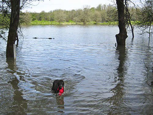 Sauvie Island Dog Training