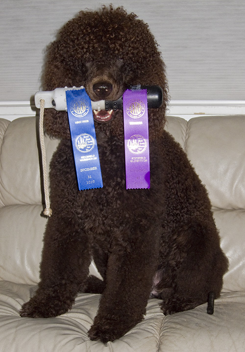 ribbons for 1st in Amateur class and then Winner's Dog