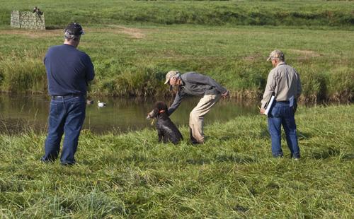 Tooey Irish Water Spaniel