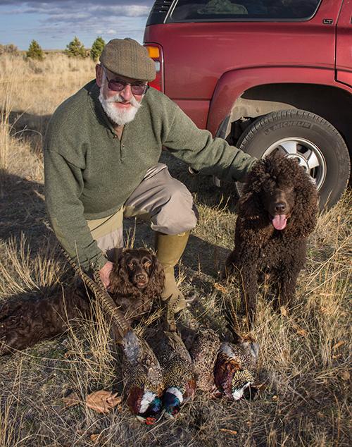 Boykin Spaniel  The Premier Magazine for HuntingDog