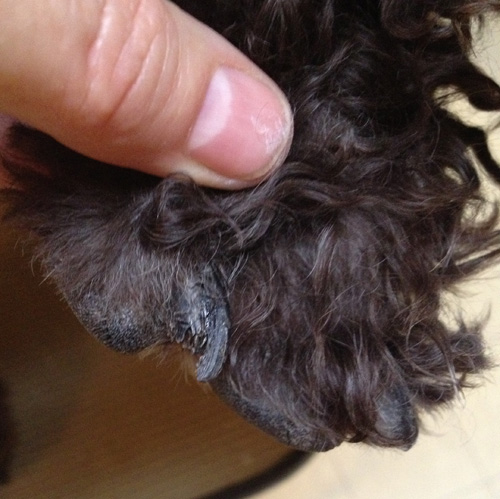 Left front index toe, from side