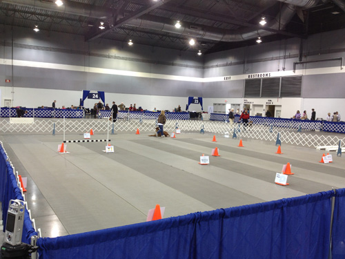 Obedience and Rally rings are the Rose City Classic dog shows