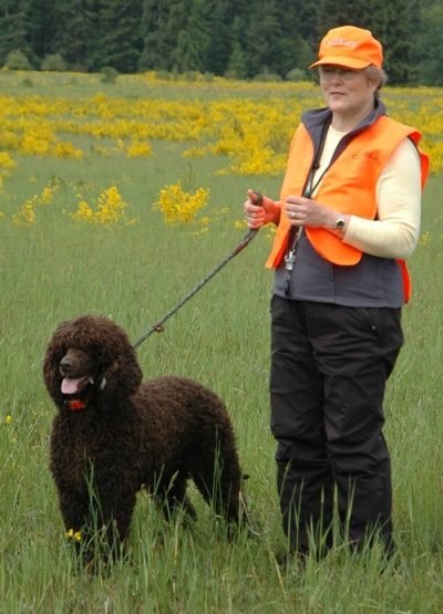 Irish Water Spaniel, IWS