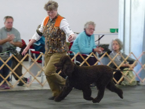 Cooper in Gun Dog class -- photo by Richard Liebaert