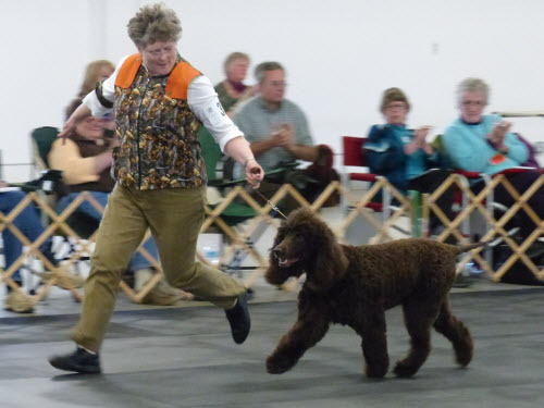 Tooey in the Gun Bitch class -- photo by Richard Liebaert