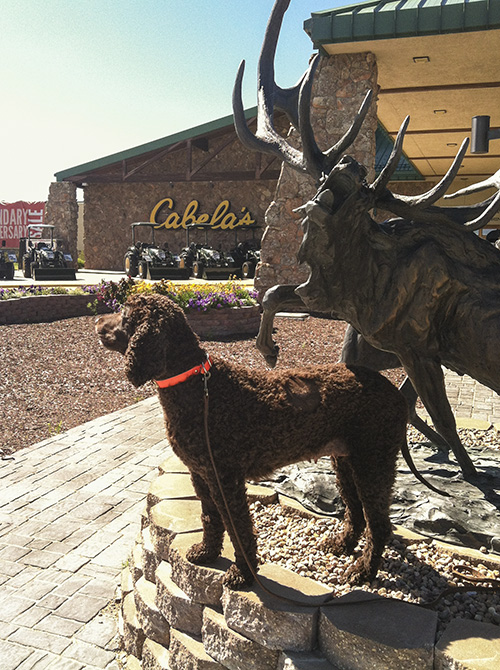 Tooey in front of the worlds largest outdoor recreation store