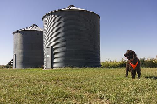 Striking a pose by the wheat silos near McDonald, Kansas