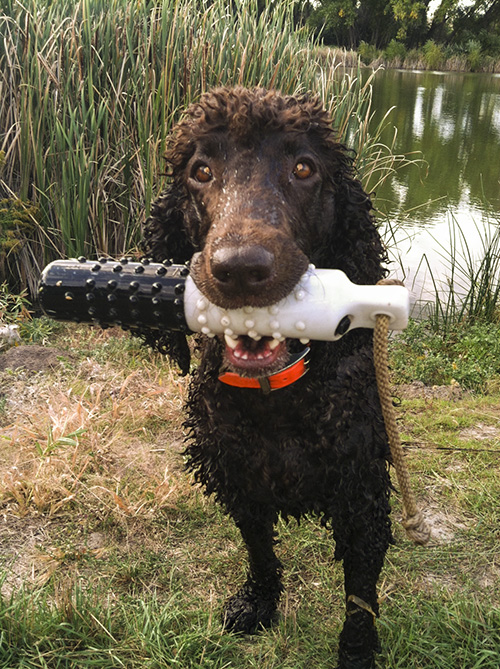 A great way to wash and Irish Water Spaniel