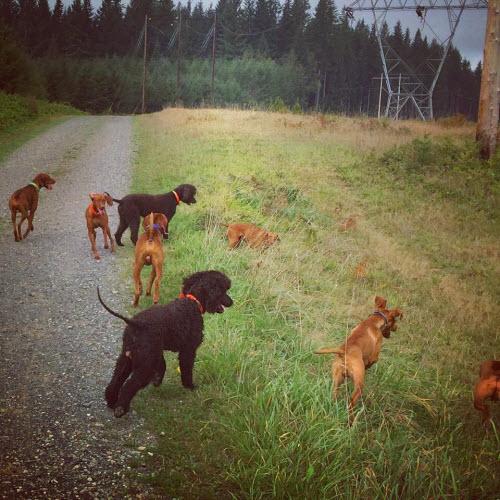 dogs_atcamp