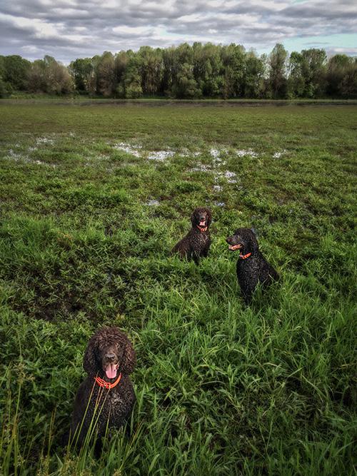 Suavie Bog Dogs