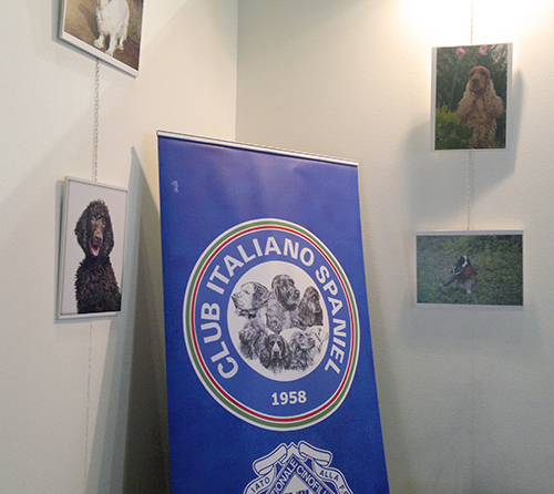 Club Italiano Spaniel booth, World Dog Show, Milan, 2015
