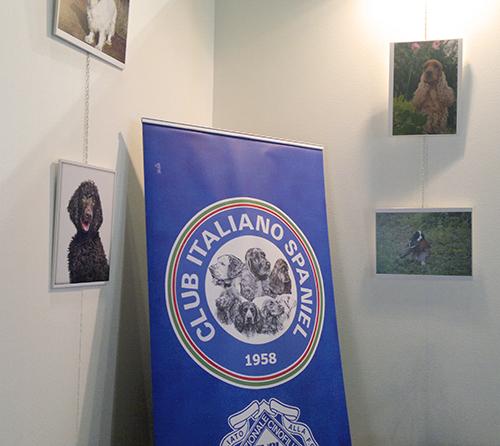 Club Italiano Spaniel booth, World Dog Show, Milan, 2015