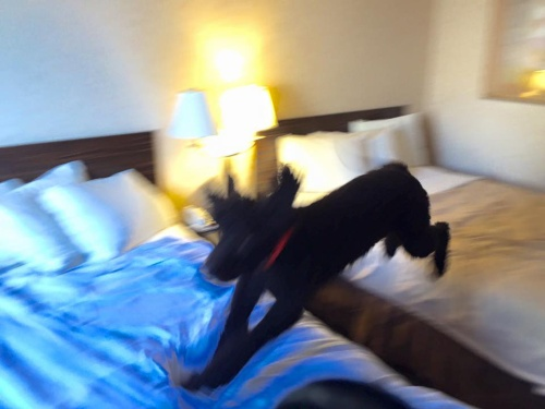 Carlin_bed_jumping_2015-10-20