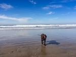 Tooey_beach