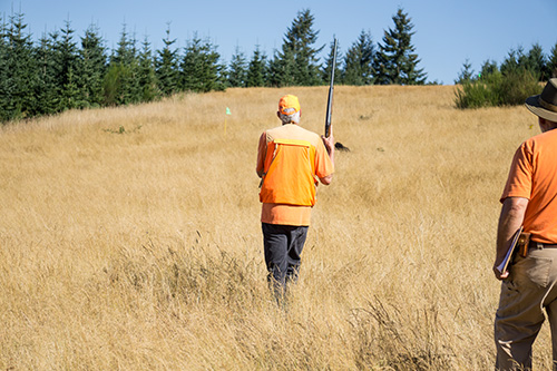 Carlin heads out to pick up a pheasant