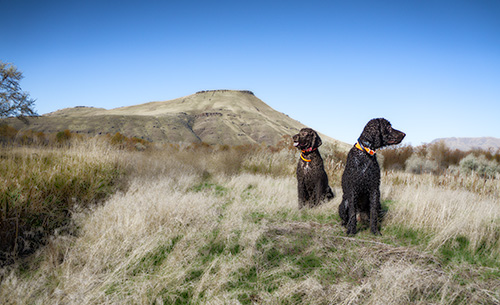 Carlin and Tooey ton their Idaho pheasant hunt